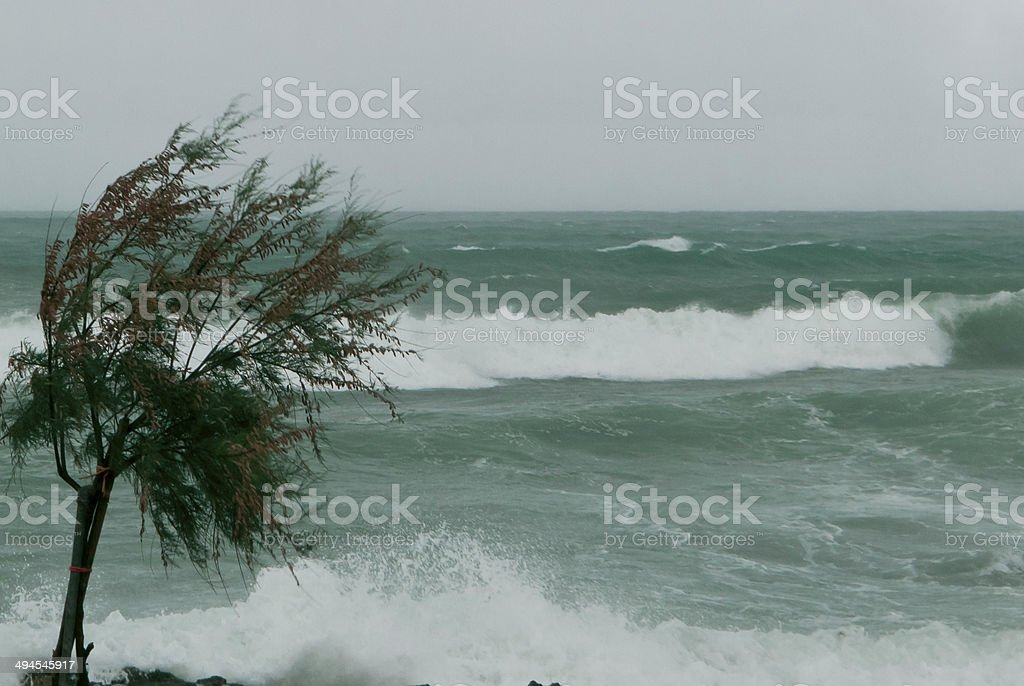 Sea storm and pine tree. stock photo
