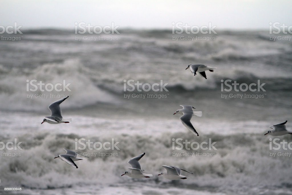 sea storm and seagulls stock photo
