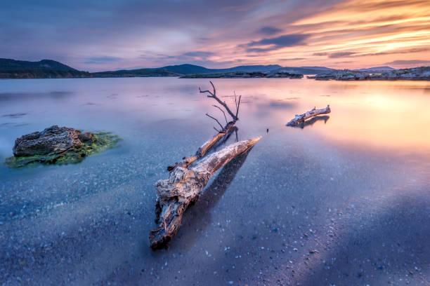zonsondergang van de zee kalm en kleurrijk - pink and orange seashell background stockfoto's en -beelden