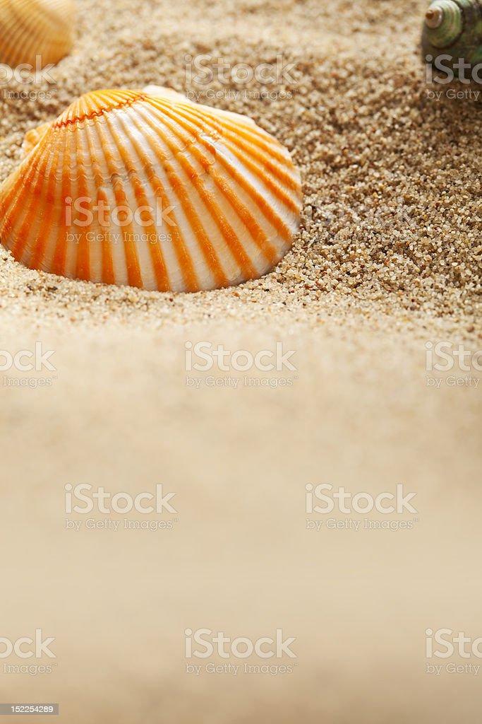Sea Theme - sand and shells stock photo
