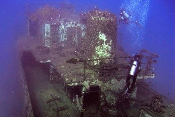 sea tiger stern - artificial reef stock pictures, royalty-free photos & images