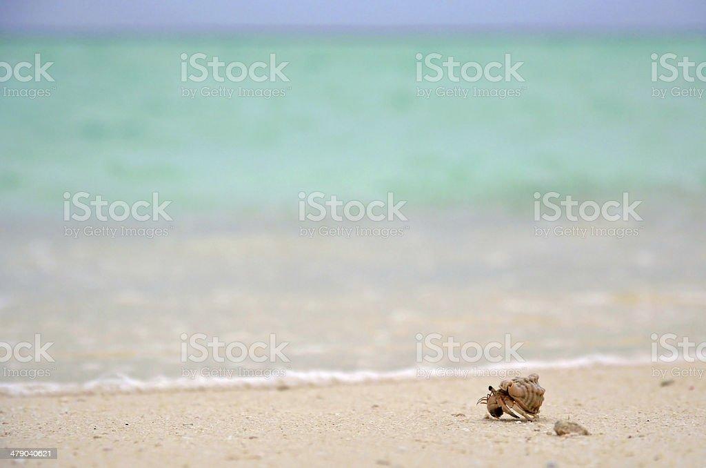Sea Traveller royalty-free stock photo