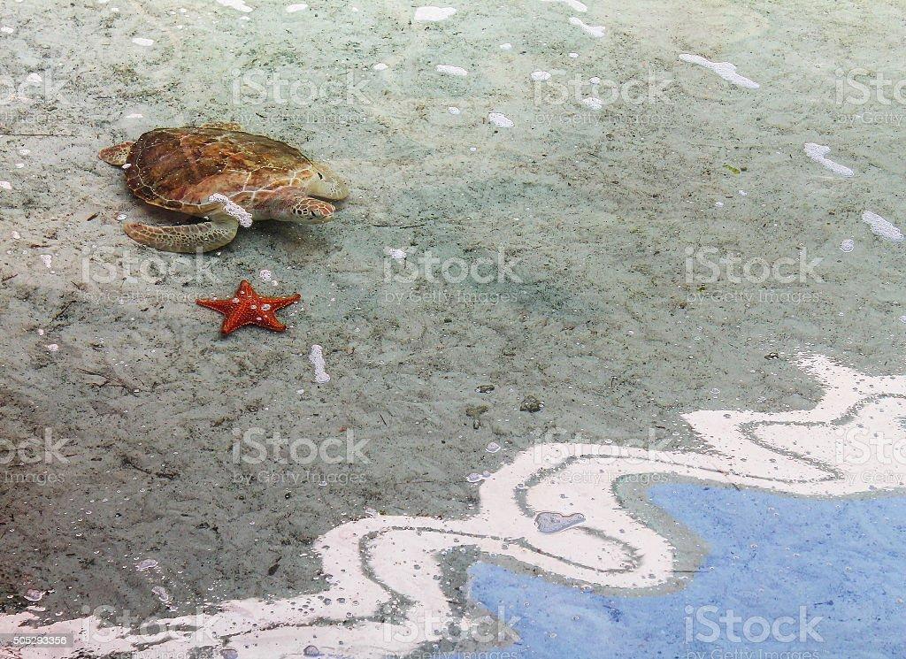 Sea turtle and Starfish on the beach stock photo