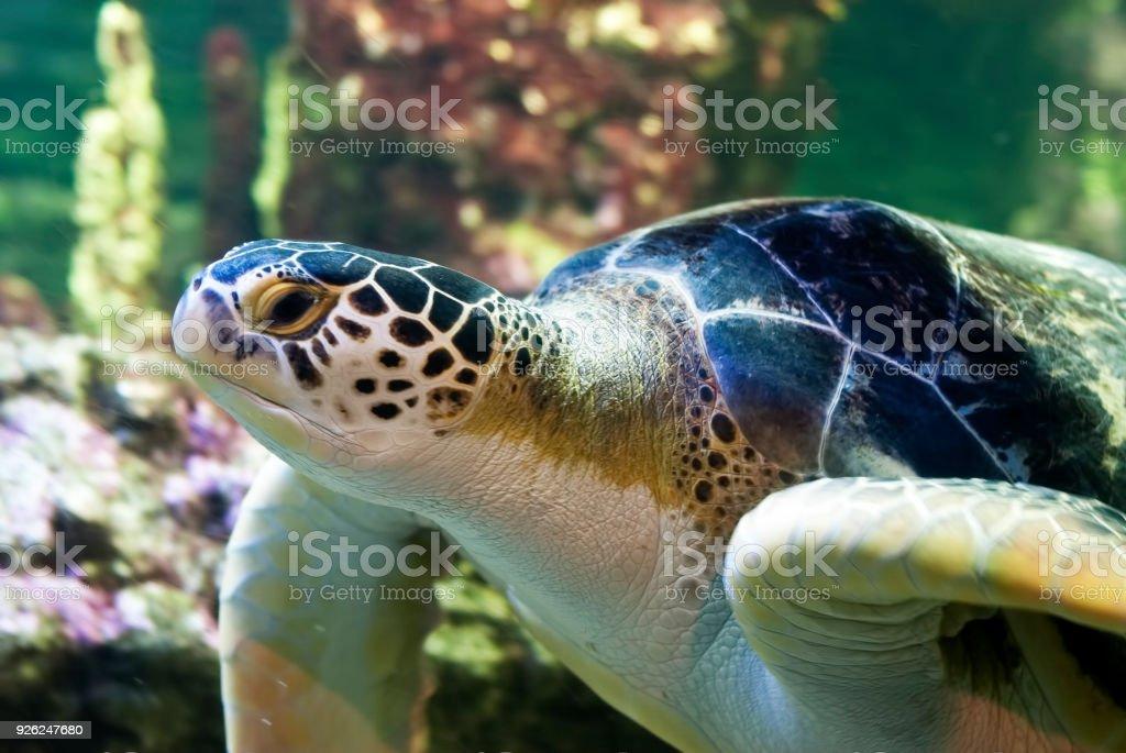sea turtle close up stock photo