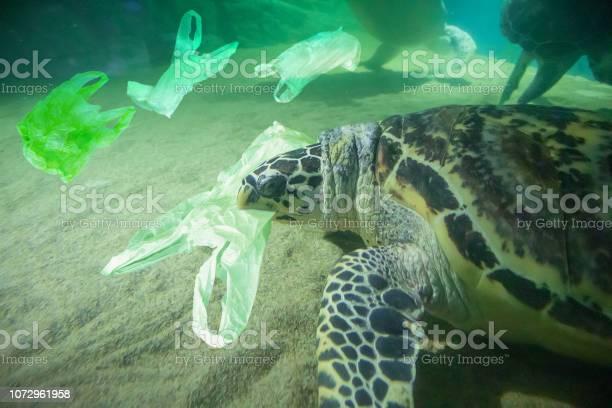 Sea turtle eat plastic bag ocean pollution concept picture id1072961958?b=1&k=6&m=1072961958&s=612x612&h=ka6wje7o2ygy213gviv8zsnlkaykvdksfyxqwl0dpva=