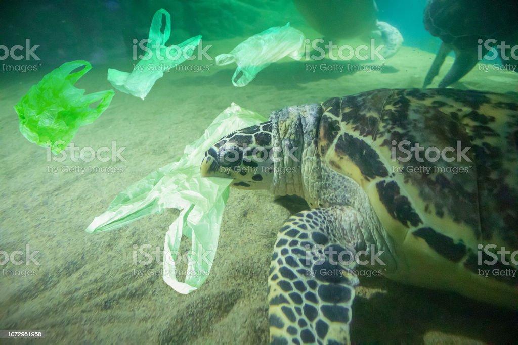 Sea Turtle eat plastic bag ocean pollution concept stock photo