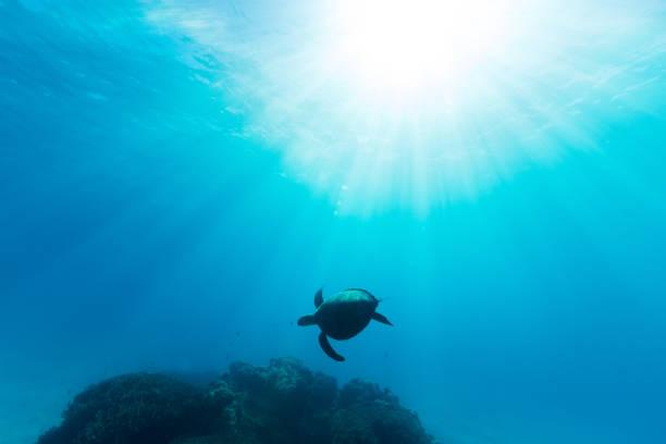 Sea Turtle Illuminated by Sun Beams stock photo