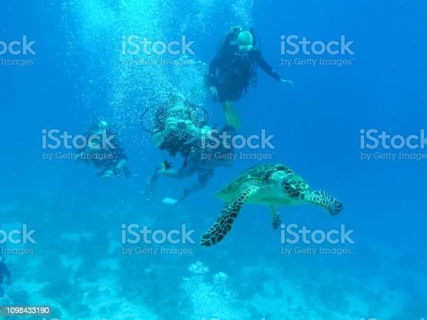 Sea turtle in the sea under water swims marine reptile picture id1098433190?b=1&k=6&m=1098433190&s=612x612&h=lhxnbqrvz36m9ugrujsst6u2d5sn0czrnevdhhtob74=