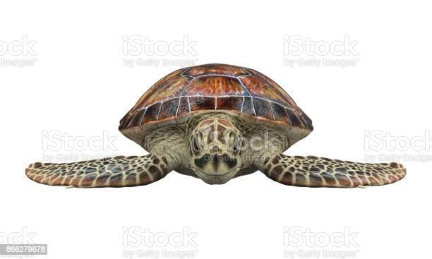 Sea turtle isolated picture id866279678?b=1&k=6&m=866279678&s=612x612&h=jckb7su15khjcuqjbofwss34becemtu4wp12 mzsrce=