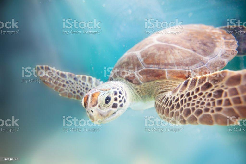 Sea Turtle Ocean stock photo