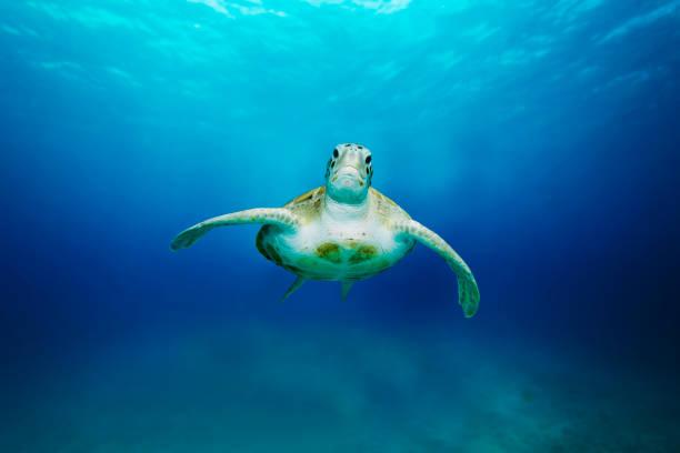 Meeresschildkröte – Foto