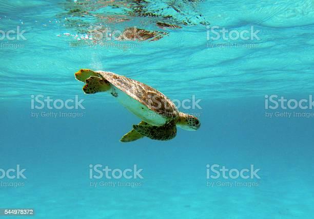 Sea turtle picture id544978372?b=1&k=6&m=544978372&s=612x612&h=kwbx3b3r prucohztarx2q fpe5fd 5ji2dkg7n55z8=