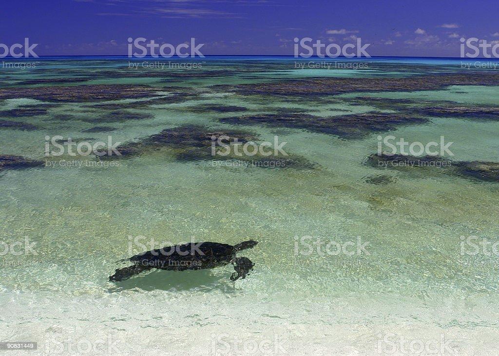 Sea Turtle stock photo