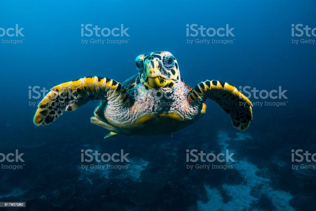 Tortuga de mar - foto de stock