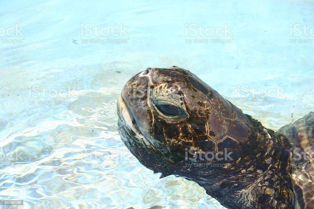 Sea Turtle - Royalty-free Animal Eye Stock Photo