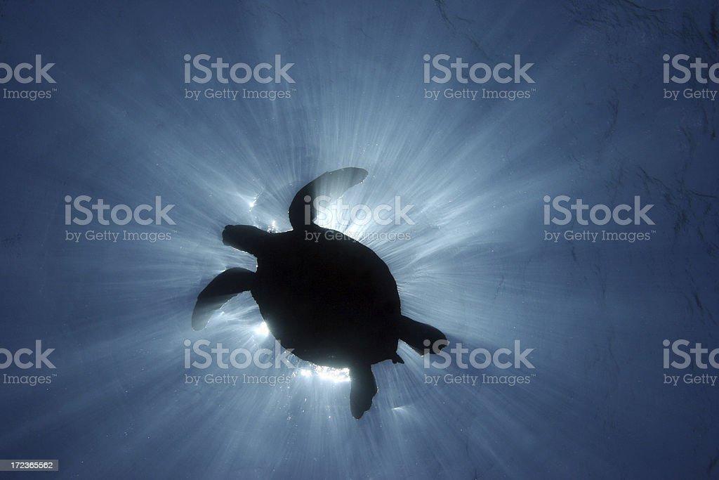 Sea Turtle Silhouette royalty-free stock photo