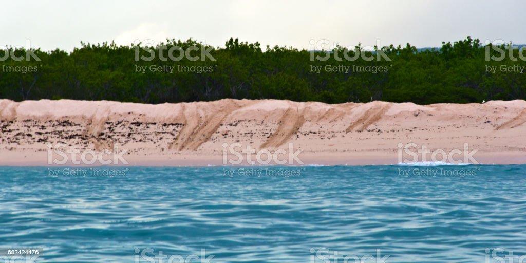 Sea Turtle Tracks royalty-free stock photo