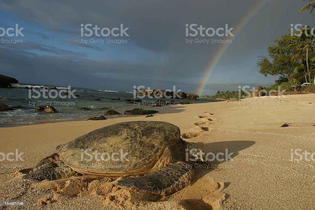 Sea turtle with rainbow royalty-free stock photo