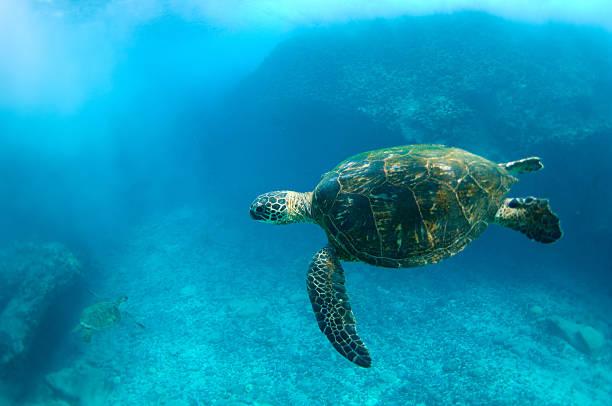 Meeresschildkröten – Foto