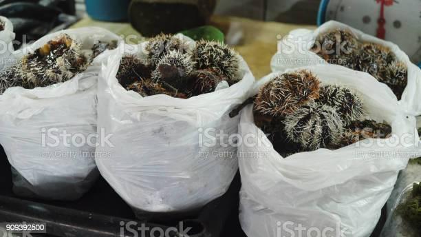 Sea urchin in asian market picture id909392500?b=1&k=6&m=909392500&s=612x612&h=mrzkauvjpm9tsbsttq2b7q3wyfbd99ddqyun9ian3ug=