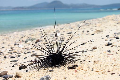 Zeeegels Op Het Zand In De Buurt Van Het Strand Stockfoto en meer beelden van Abstract