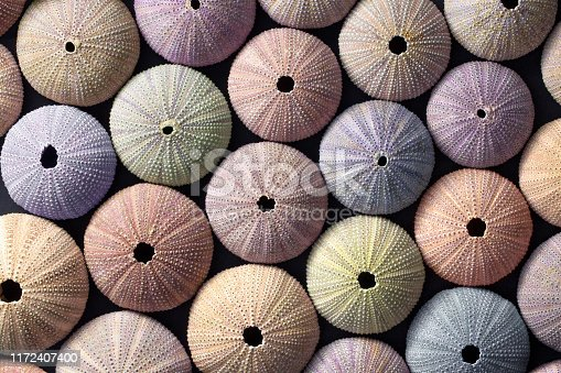 istock Sea urchin shells of various colours 1172407400