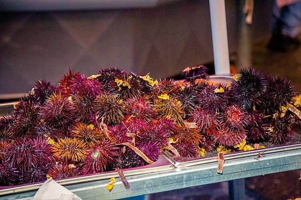 sea urchins at Catania fish market stock photo