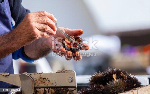 Sea urchins being prepared in a Catalonian coastal village, in Calella.
