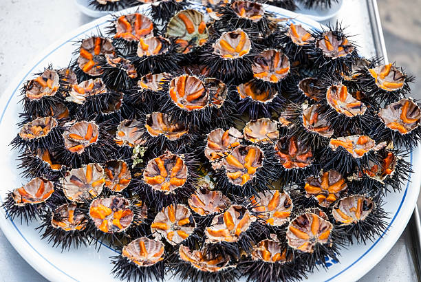 Sea urchins on plate stock photo