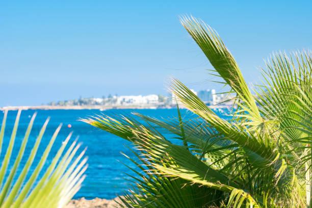blick auf das meer durch palmblättern - hochzeitsreise zypern stock-fotos und bilder
