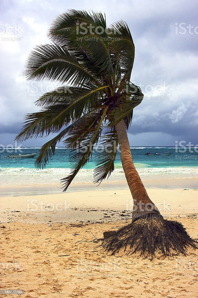 sea weed  and coastline in mexico royalty-free stock photo