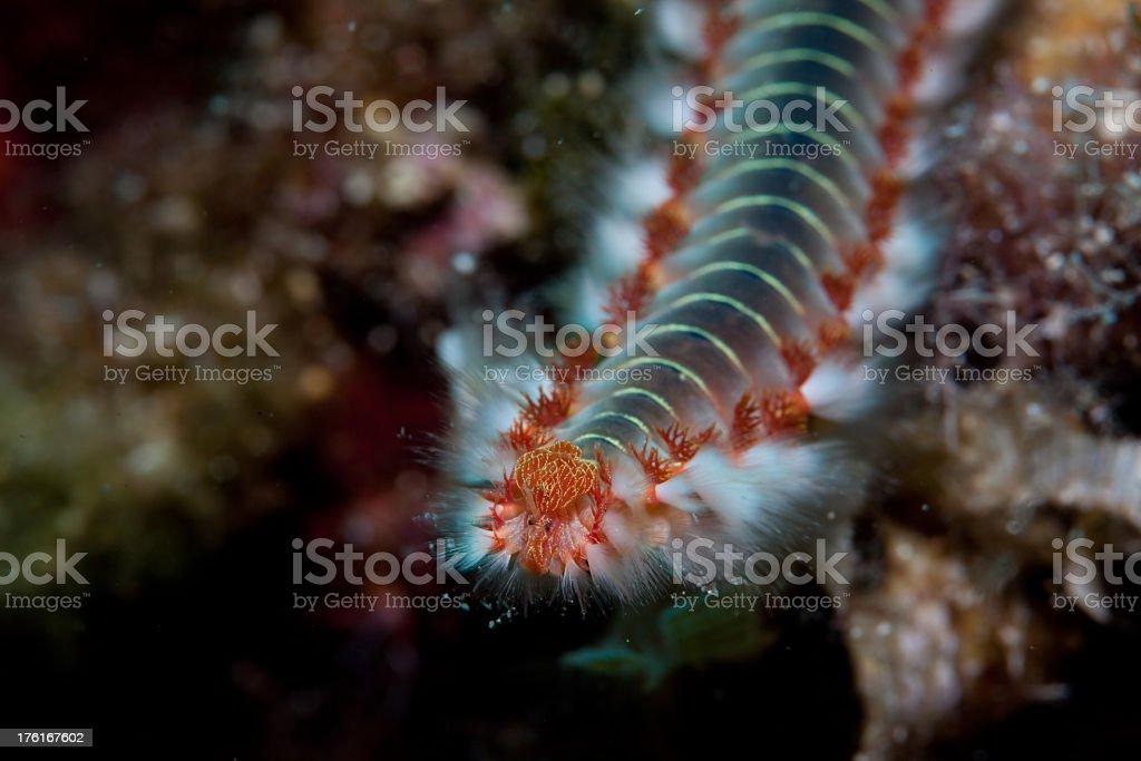 Sea worm stock photo