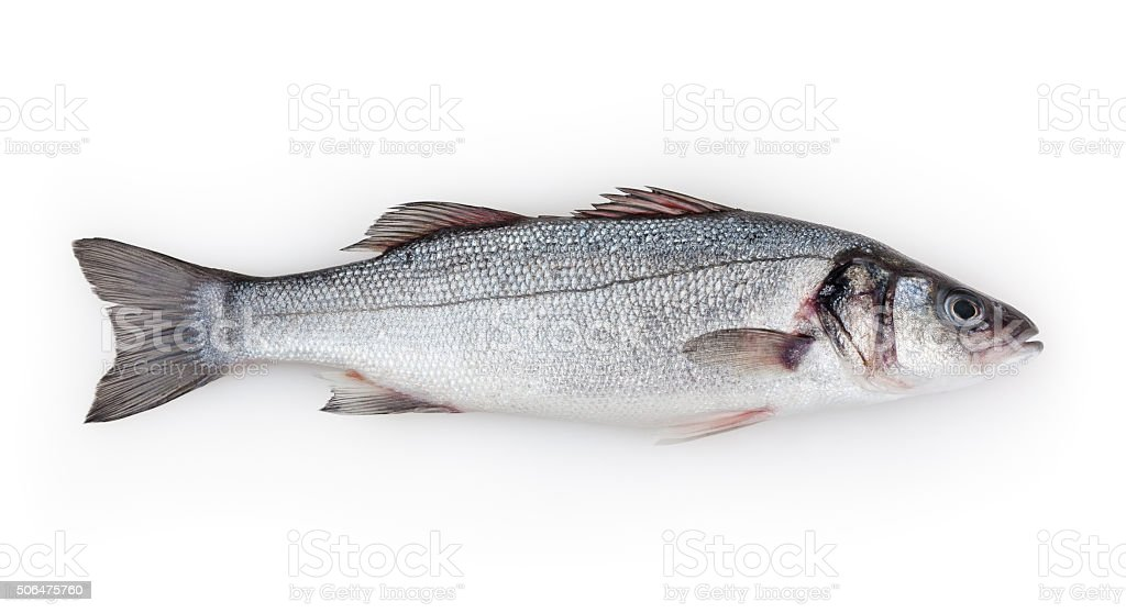 Seabass isolated on white background stock photo