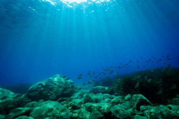 seabed in the mediterranea sea - ocean floor stock photos and pictures