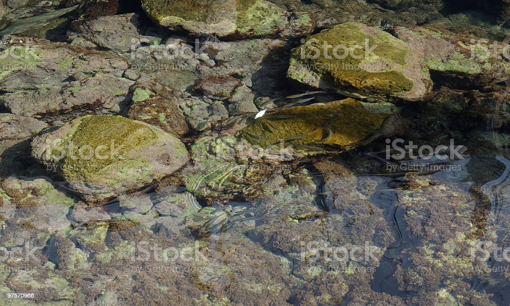seabed royalty-free stock photo