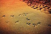 Seabird footprints in the sunset