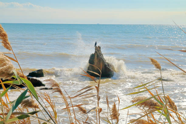 Seabird on a stone cliff.