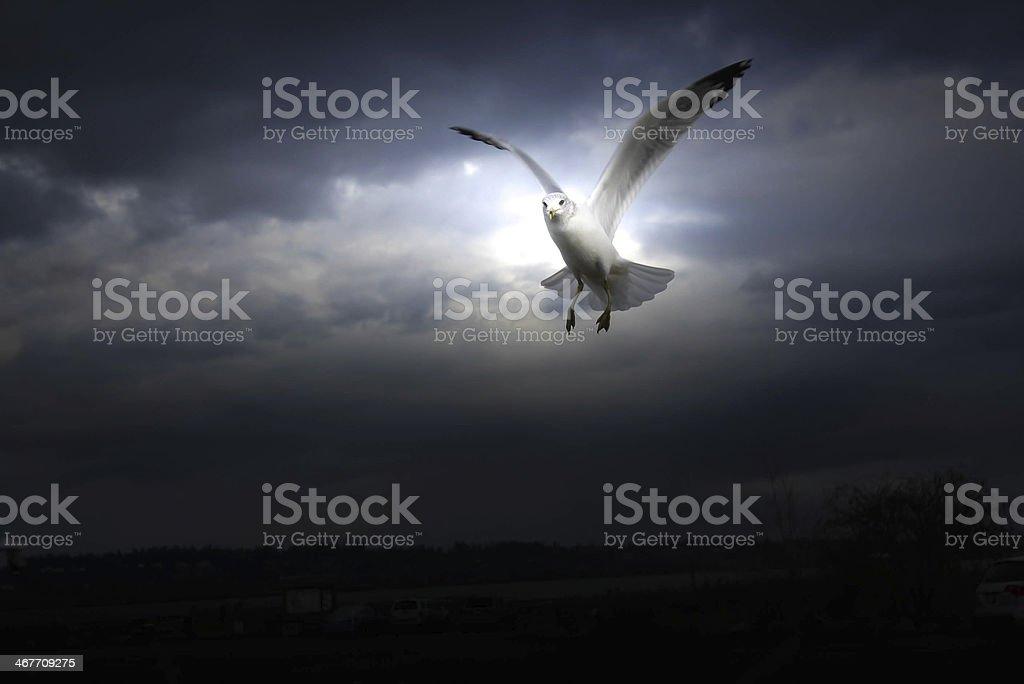 Seabird on dark background royalty-free stock photo
