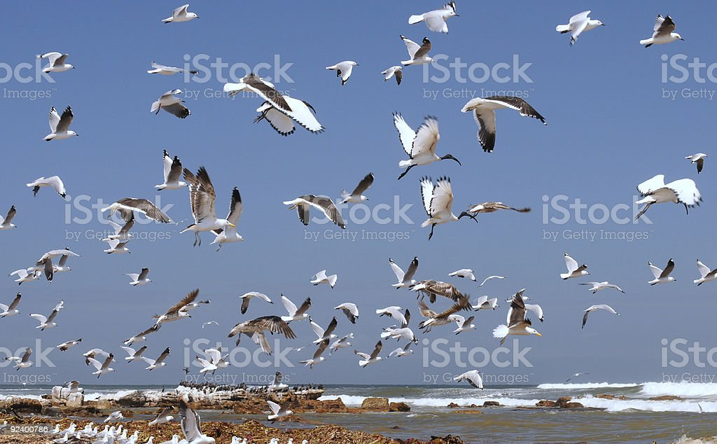 Seabird Skies stock photo