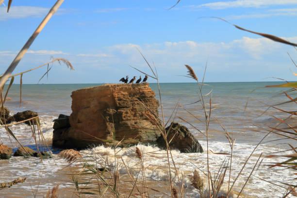 Seabirds - cormorants, rest on a cliff.