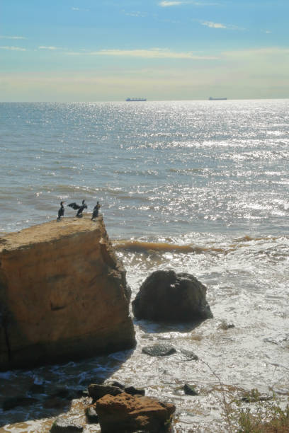 Seabirds - cormorants resting on the edge of a cliff above the sea.