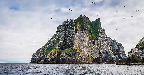 seabirds flying over dramatic ocean island cliffs st kilda scotland - uccello marino foto e immagini stock