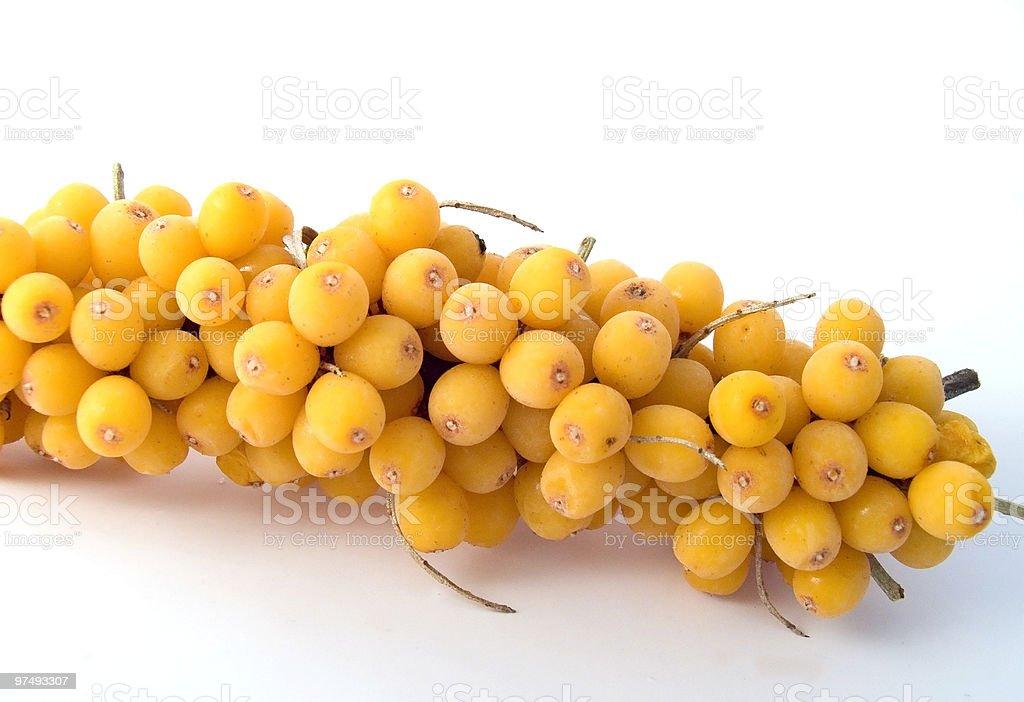 Sea-buckthorn berries royalty-free stock photo