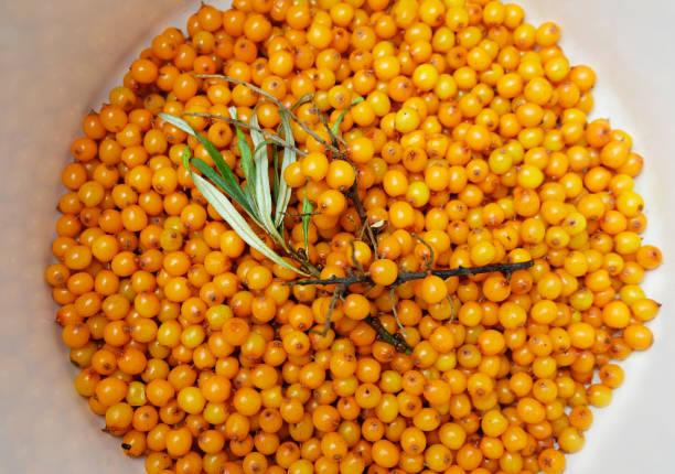 잼과 가지를 위해 준비된 바다 갈매나무 열매(히포파에) - 씨벅턴 뉴스 사진 이미지