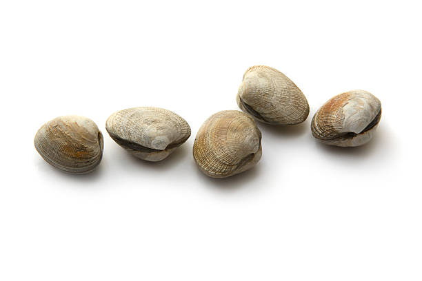 owoce morza: małż - mięczak zdjęcia i obrazy z banku zdjęć