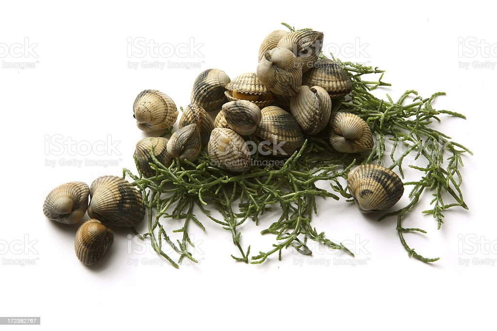 Seafood: Cockles and Glasswort royalty-free stock photo