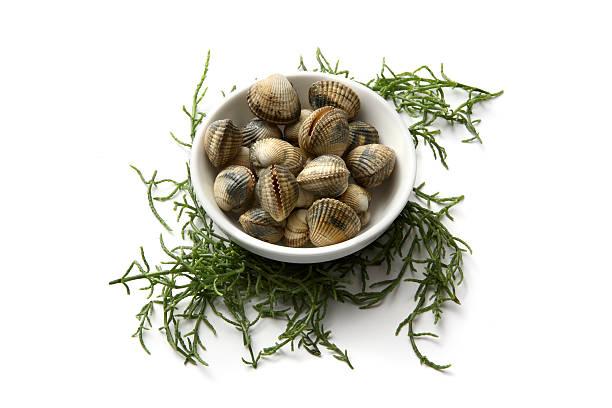 meeresfrüchte: herzmuscheln und glasswort - herzmuschel stock-fotos und bilder