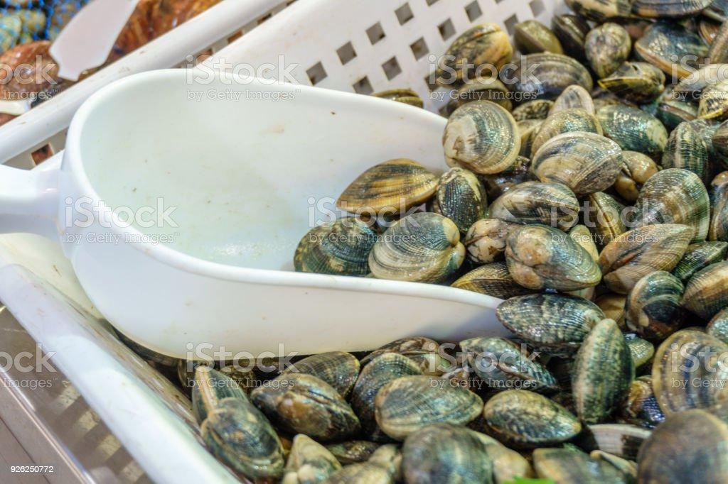 Vieiras de Cockleshells o cáscaras de marisco con bola blanca en el mercado - foto de stock