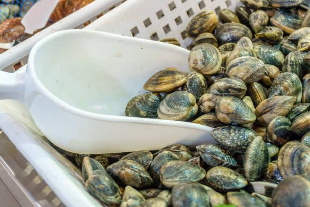 meeresfrüchte dafгјr oder muscheln jakobsmuscheln mit weißen kugel auf dem markt - herzmuschel stock-fotos und bilder