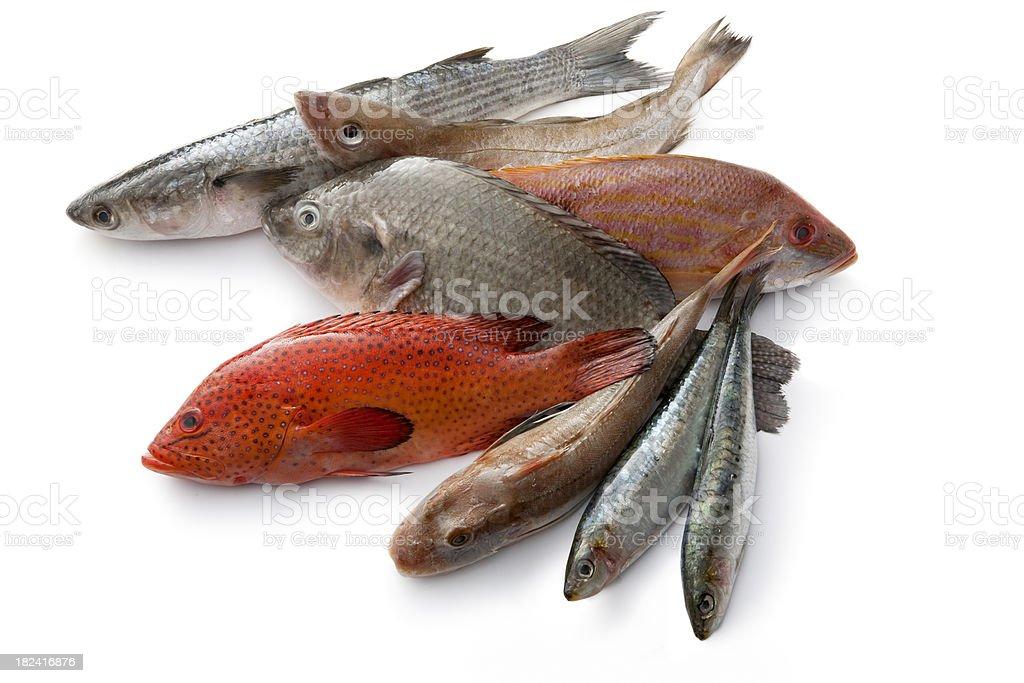 Seafood: Fish royalty-free stock photo